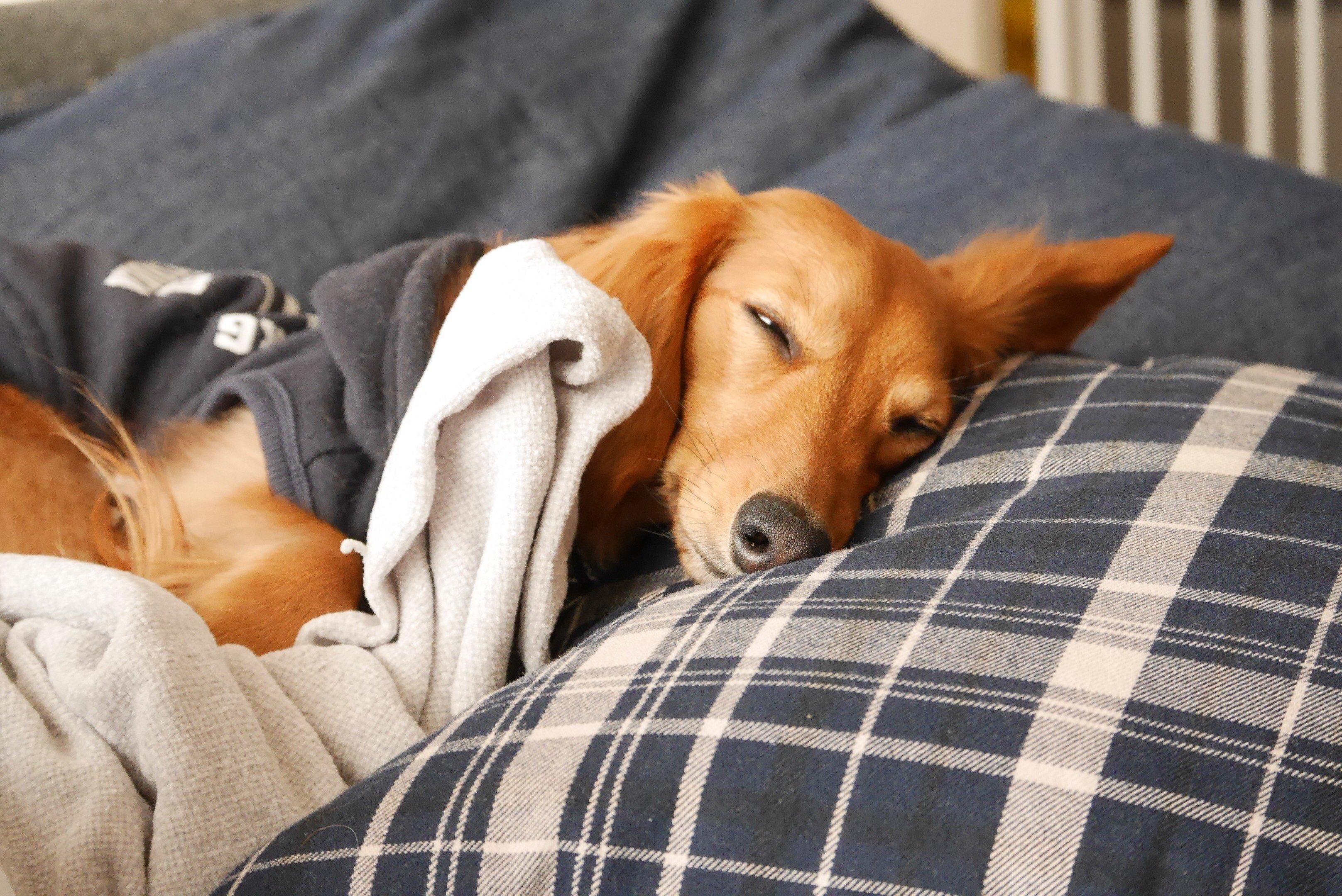 「ずっと寝ていると」の画像検索結果