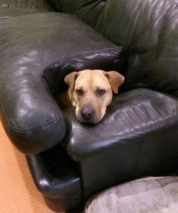 funny-dogs-not-break-rules-flexion-28-5922d291ebb04__605