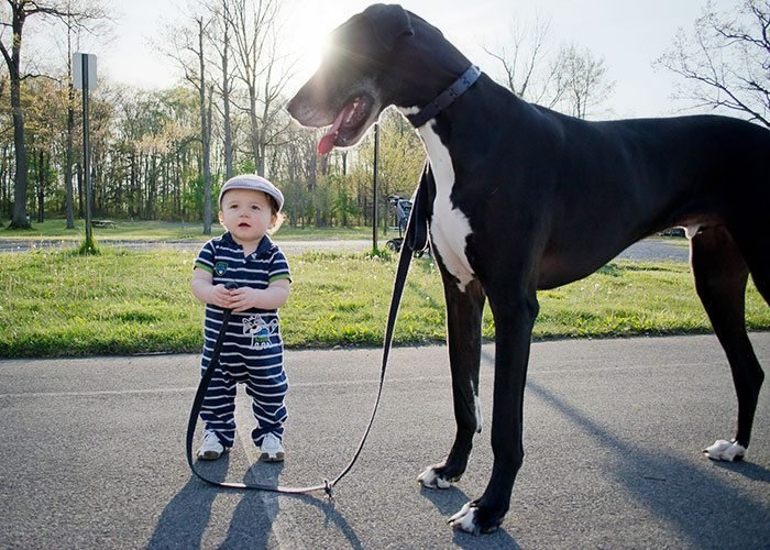 kids-with-dogs-20__700