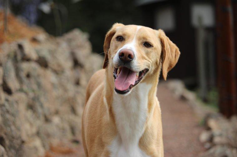 Rescue Dog portrait