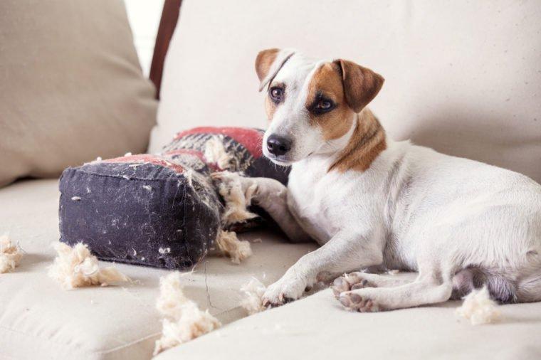 Pampering dog. Naughty puppy. mischief