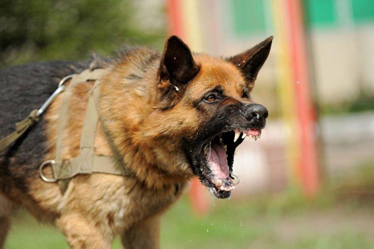 Evil, aggressive dog