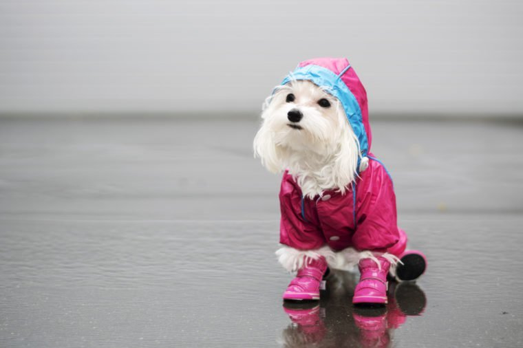 The dog in the rain