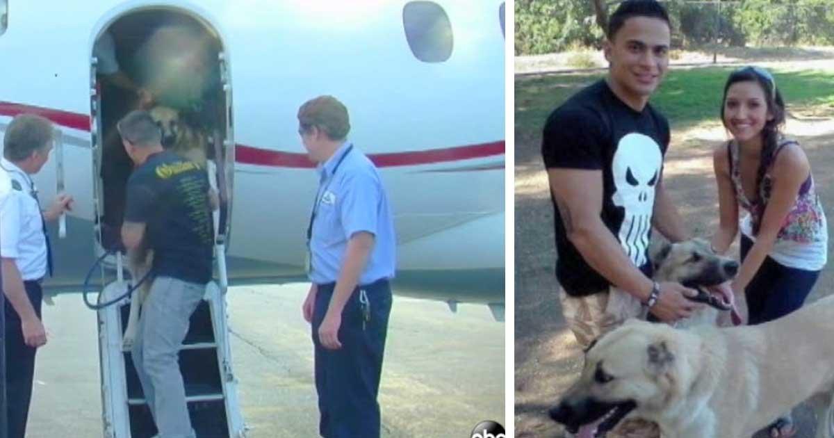 a 9.jpg?resize=648,365 - Une riche héritière affrète un jet privé pour un soldat américain dont les deux chiens ont été refusé par toutes les compagnies aériennes.