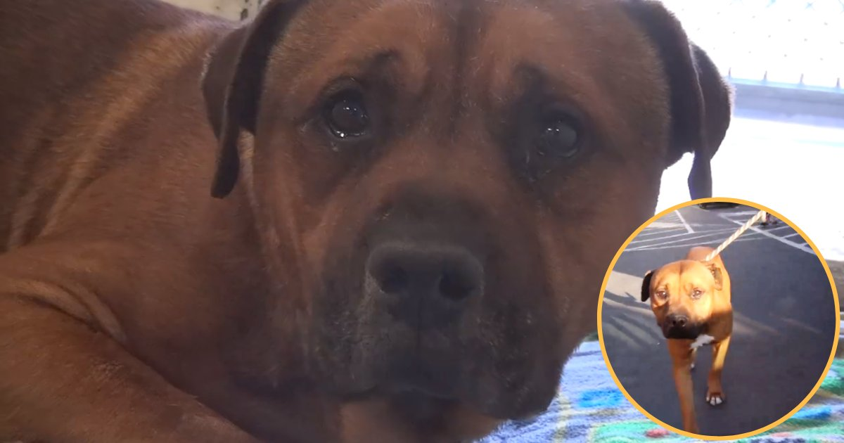 aj4.png?resize=412,275 - Heartbroken Dog Can't Stop Crying After Realizing Owners Left Him At Animal Shelter