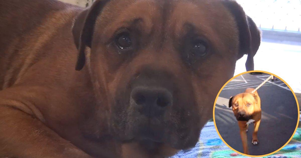 aj4.png?resize=636,358 - Un chien ne peut s'empêcher de pleurer après avoir réalisé que ses propriétaires l'abandonnait dans un refuge.