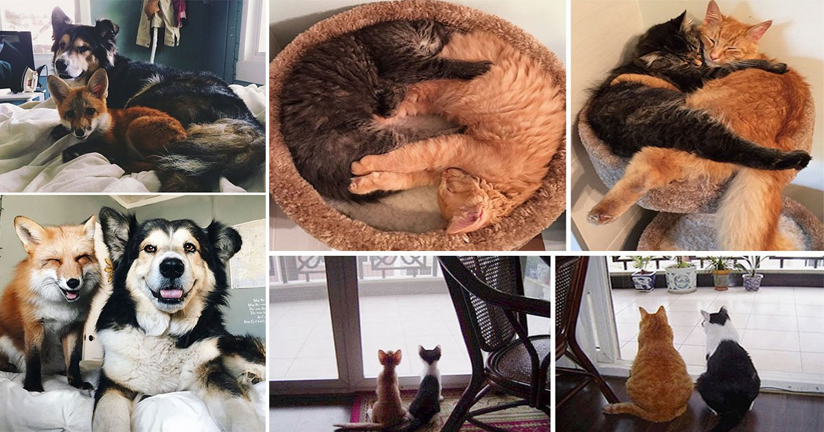 animals grow up together best friends.jpg?resize=636,358 - Before & After Pics Of Animals Growing Up Together Will Make You Believe In Friendship More