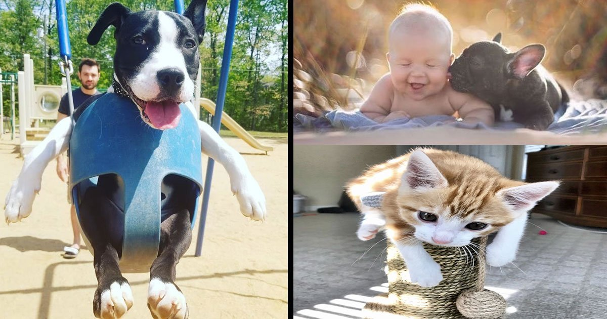 animals put smile on face when you sad.jpg?resize=300,169 - These Adorable Animals Pictures Will Make You Smile, No Matter How Sad You Are