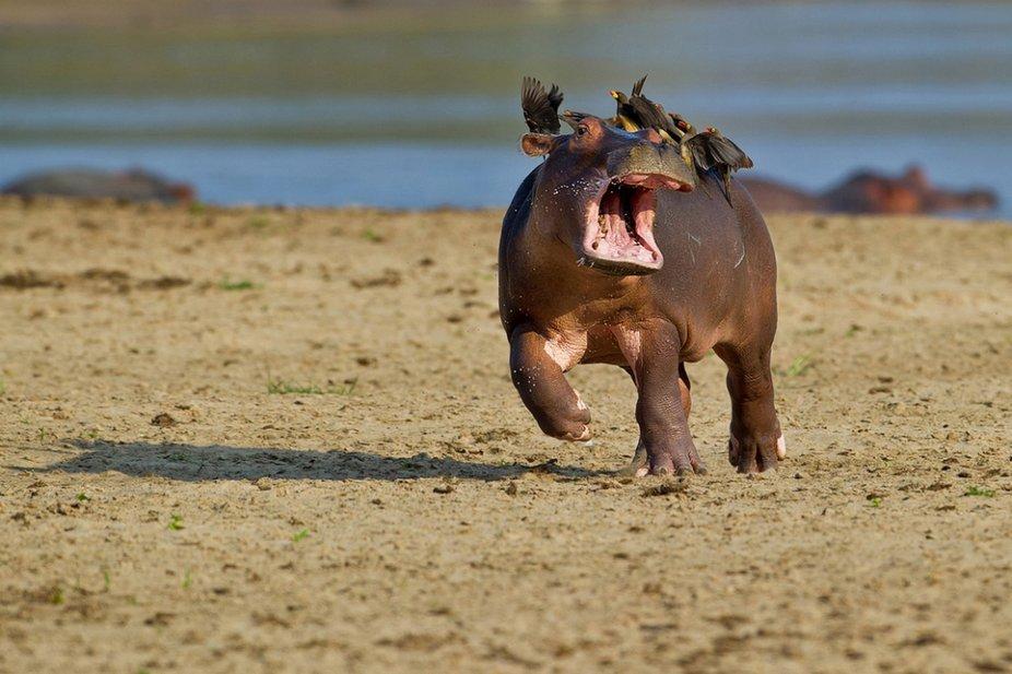 aniphotocc2015.jpg?resize=412,232 - Ce concours réunit les photos d'animaux les plus hilarantes!