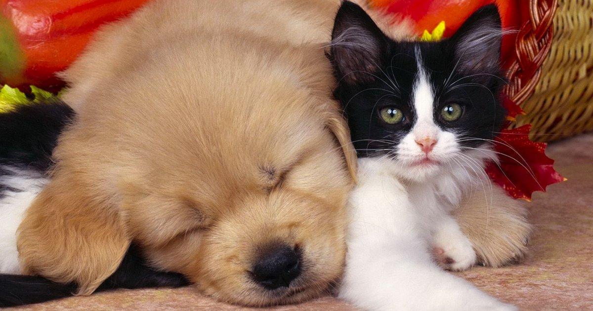 articulo1 3.jpg?resize=1200,630 - 20 Amistades Hermosas Entre Perros y Gatos Que Podrían Hacer Sonreír A Cualquiera
