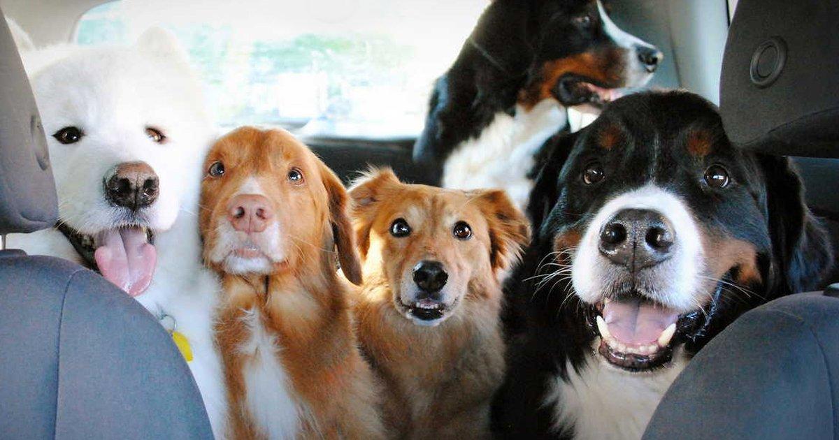 articulo11.jpg?resize=1200,630 - 19 Fotografías Que Los Amantes De Los Perros Necesitan Ver Lo Más Pronto Posible