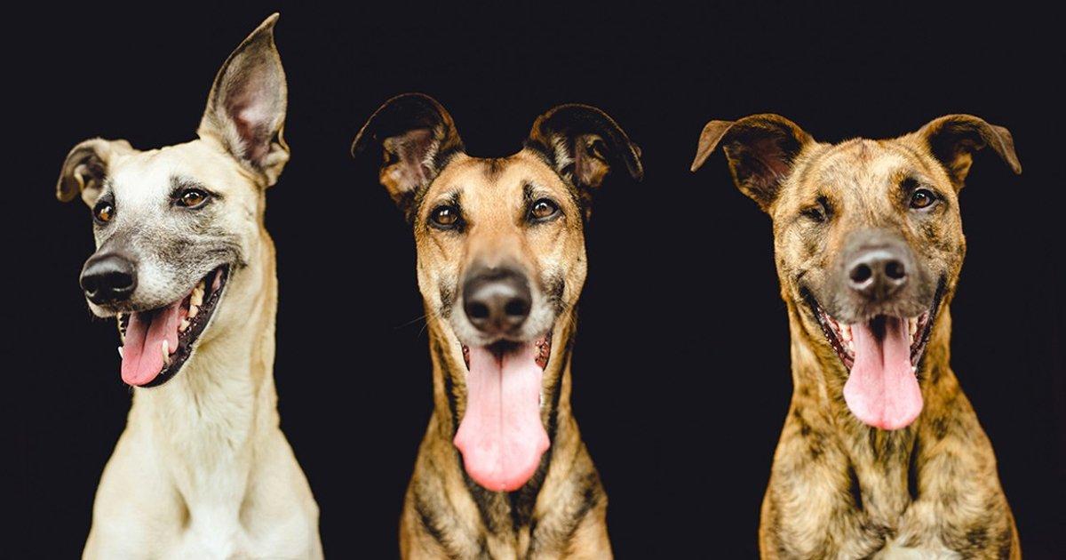 articulo12.jpg?resize=1200,630 - 20 Animales Cuya Emotividad Envidiaría Cualquier Actor
