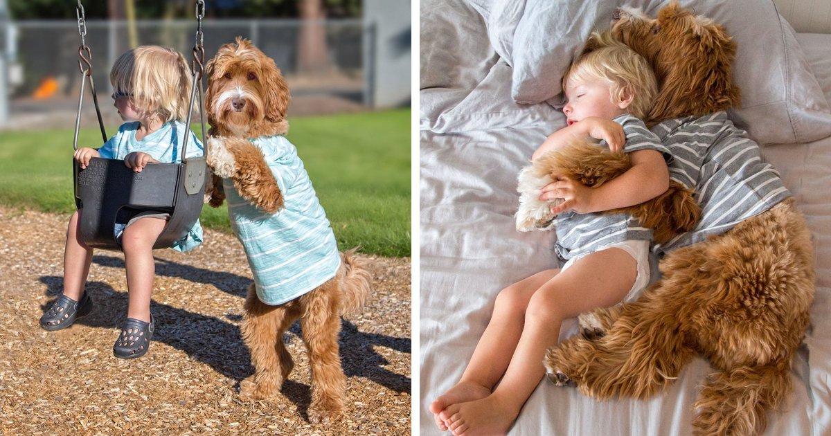 articulo2 3.jpg?resize=1200,630 - 20 Fotos Que Prueban Que Los Perros Son Un Verdadero Regalo En Nuestra Complicada Vida