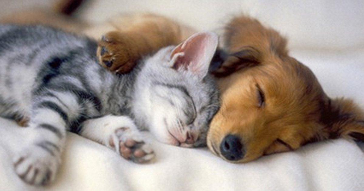 articulo24.jpg?resize=1200,630 - 26 Fotografías De Animales Que Reavivan Tu Fe En El Amor a Primera Vista