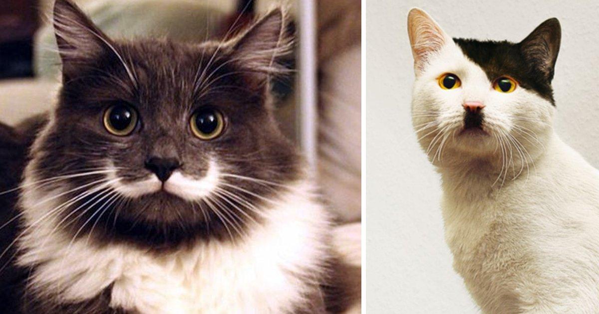 articulo3.jpg?resize=412,232 - 40 Gatos Con Un Pelaje Como El Que Nunca Has Visto Antes