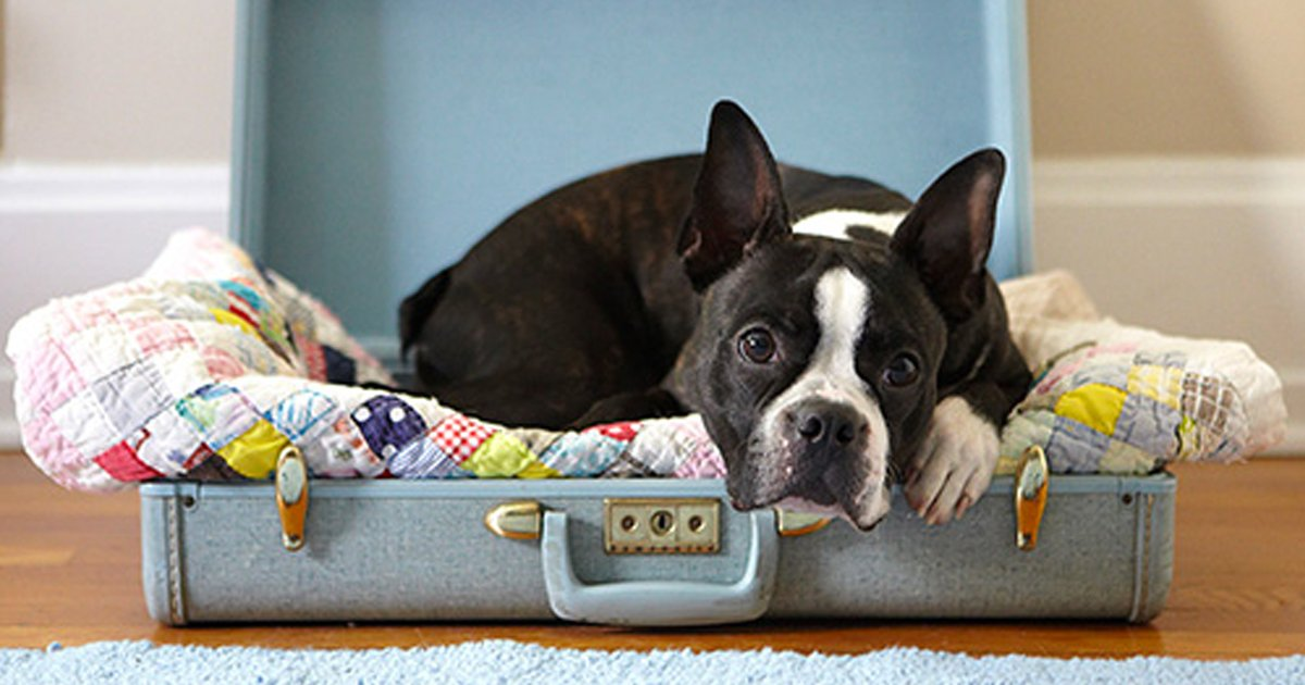 articulo6.jpg?resize=1200,630 - 20 Animales Que No Pueden Creer Que Nos Vayamos De Viaje Sin Ellos