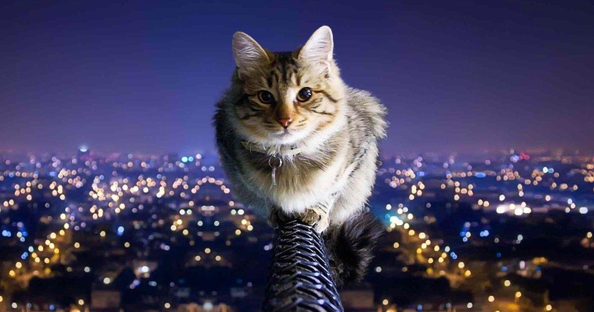 articulo7.jpg?resize=1200,630 - 18 Pruebas De Que Los Gatos Son Individuos Multifacéticos