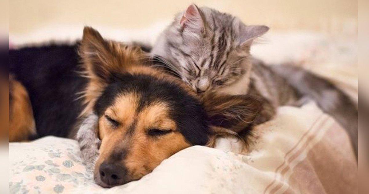 articulo8.jpg?resize=1200,630 - 20 Gatos Que Pierden La Cabeza Por Los Perros