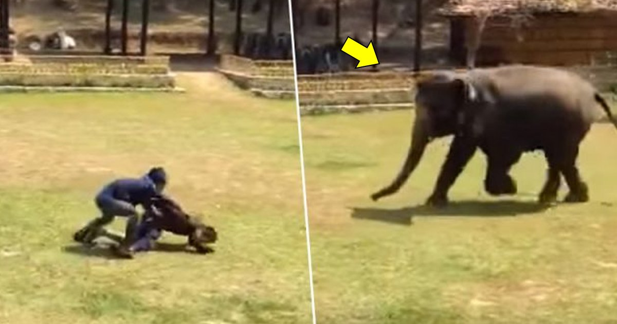 bbbs.jpg?resize=1200,630 - Elefante corre para o resgate de seu cuidador depois que ele é 'atacado'