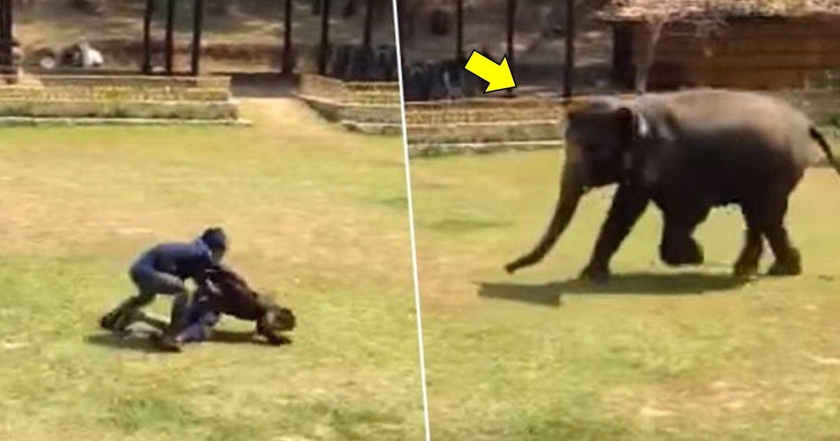 """bbbs.jpg?resize=648,365 - L'éléphant se précipite à la rescousse de son gardien après qu'il ait été """"attaqué""""."""