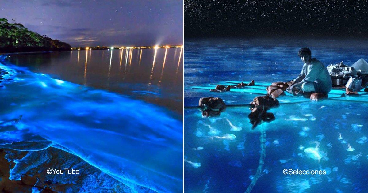 bioluminscencia.jpg?resize=300,169 - 5 sorprendentes playas con bioluminiscencia que ofrecen un espectáculo increíble