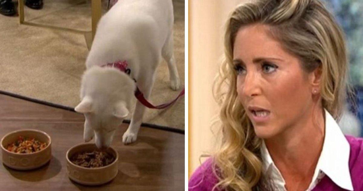capa19.png?resize=300,169 - Mulher jurou que seu cachorro era vegetariano, até se provar errada em programa de televisão