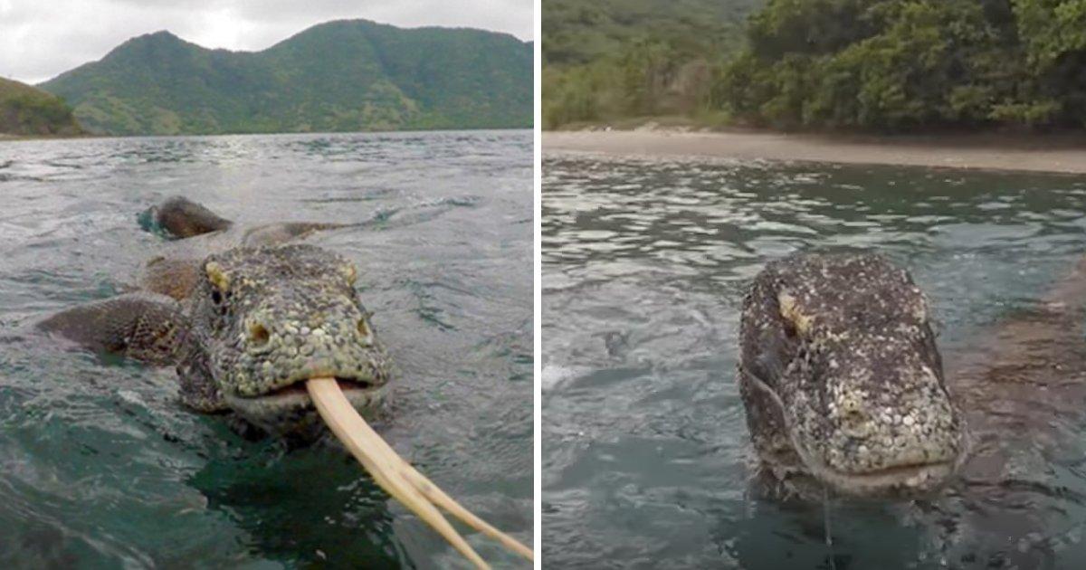 capa37u 1.png?resize=1200,630 - Pescador consegue afastar um Dragão de Komodo de seu barco com apenas um galho