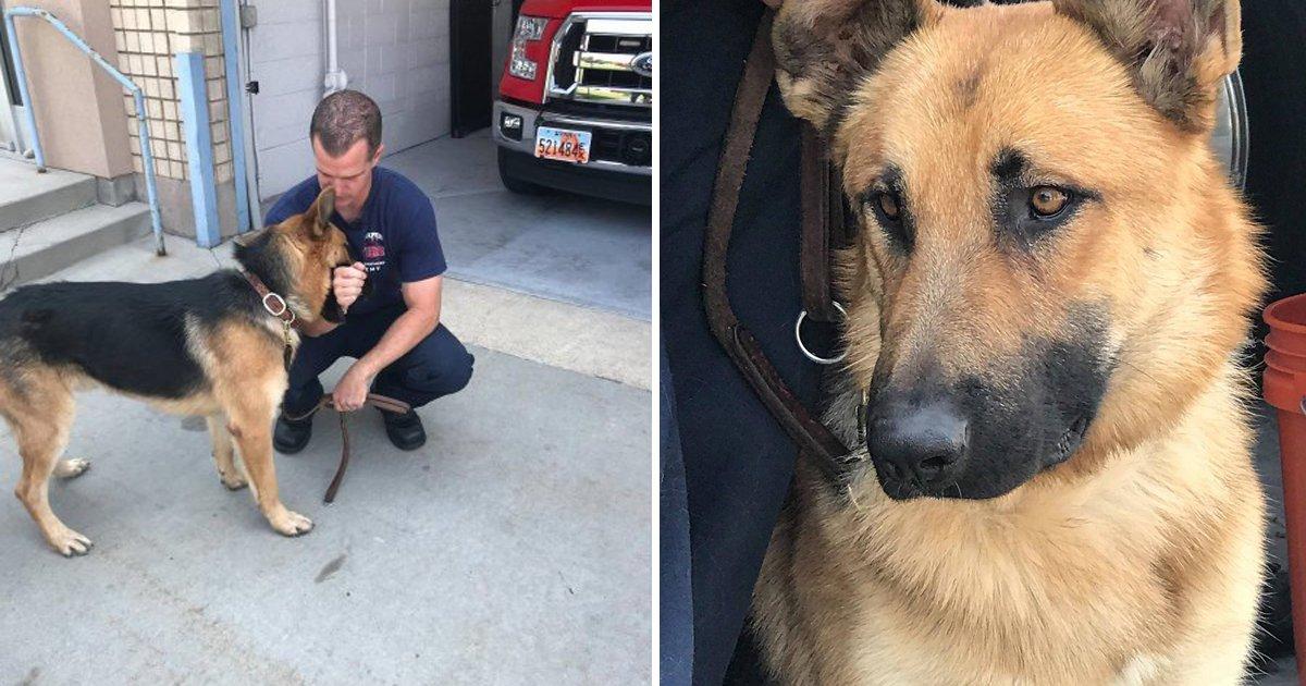 capa98.png?resize=1200,630 - Bombeiro salva cachorro de um incêndio florestal e o adota