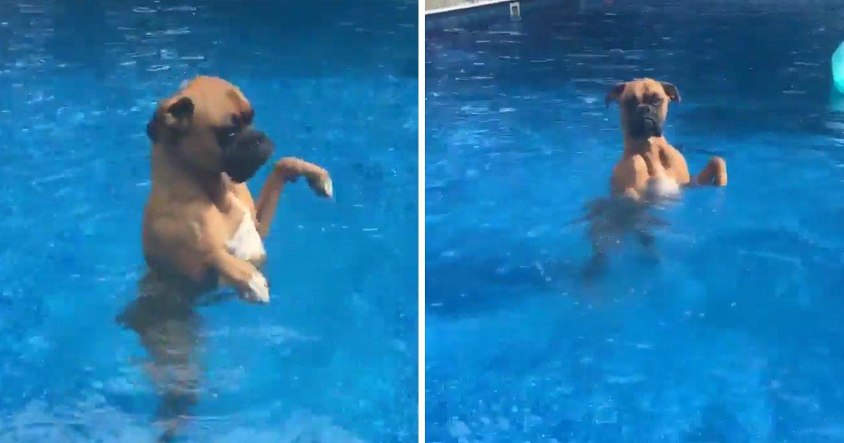 capa98kk.png?resize=636,358 - Esse cachorro não sabe nadar e sua reação na piscina é hilária