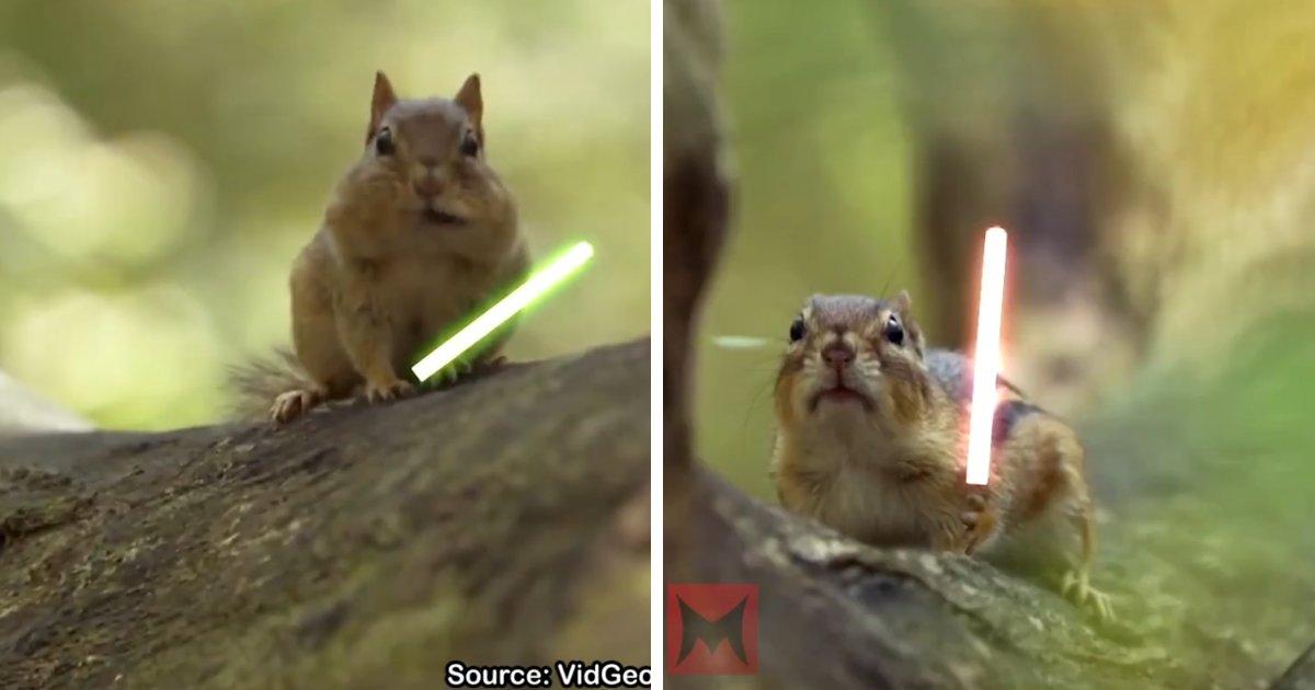 capaff.png?resize=1200,630 - Montagem hilária coloca esquilos para duelarem com sabres de luz