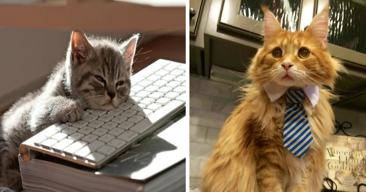 cat us work.jpg?resize=1200,630 - 15 Hilarious Cats Who Behave Exactly Like Us at Work