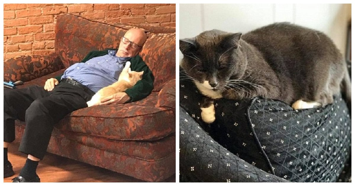catman.jpg?resize=412,232 - Cat-Napping 75-Year-Old Becomes Internet Sensation Due To Pics Of Him Sleeping With Rescued Cats