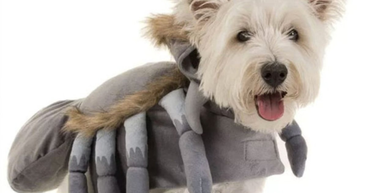 costume.png?resize=636,358 - Getting Ready For Halloween? B&M Is Now Selling Dog Halloween Costumes From Just $3.99