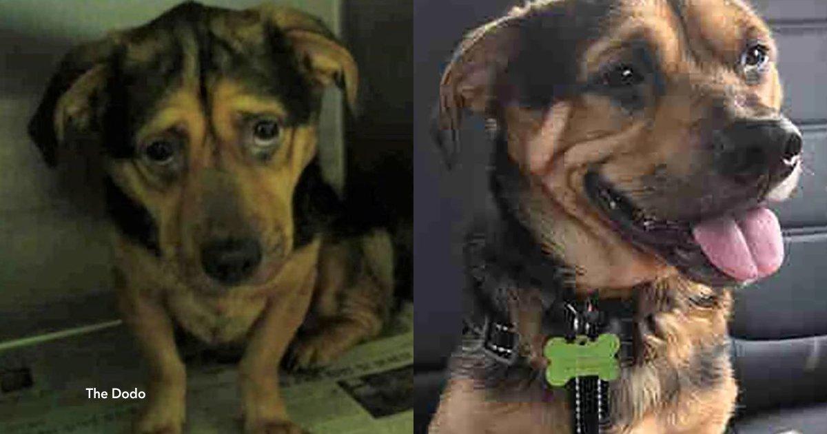 cover22 12.png?resize=1200,630 - O cão mais triste do mundo finalmente está feliz graças a um casal que viajou 6 horas para adotá-lo