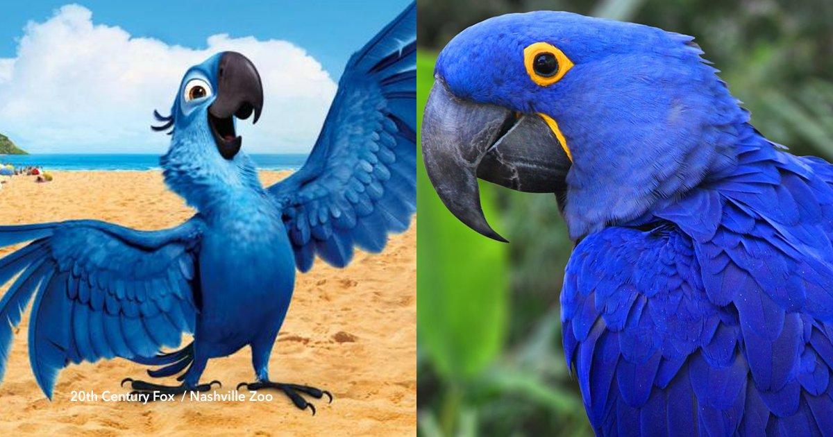 """cover22 21.png?resize=636,358 - É declarada extinta a arara azul na qual o filme """"Rio"""" foi inspirado"""