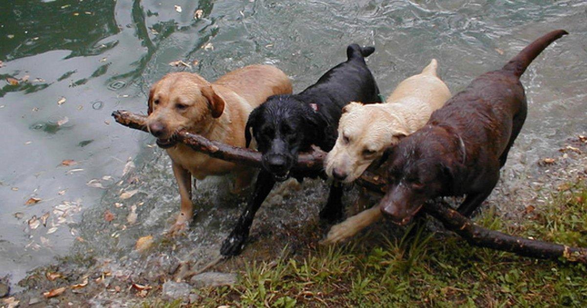 cover22 48.png?resize=1200,630 - 20+ Fotografías divertidas en las que los animales han dominado el arte de trabajar en equipo 23