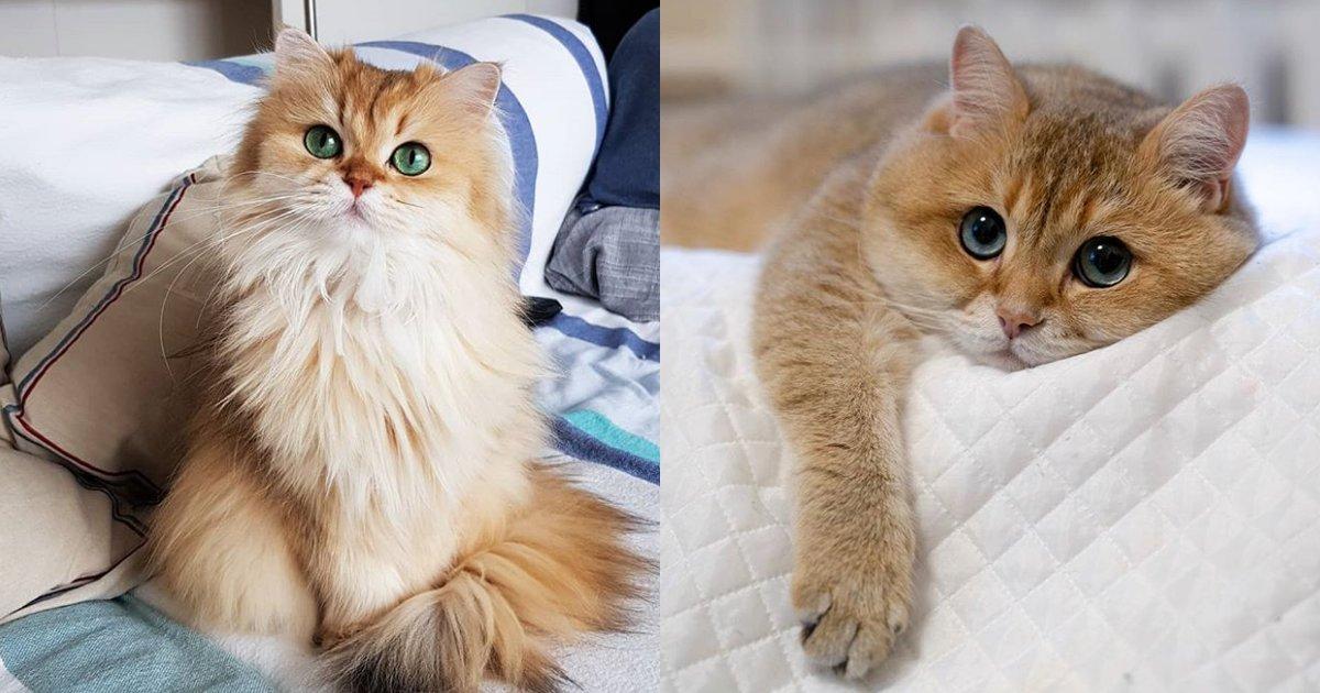 cover22 66.png?resize=636,358 - 20+ Gatos que son tan hermosos que podrían derretir cualquier corazón