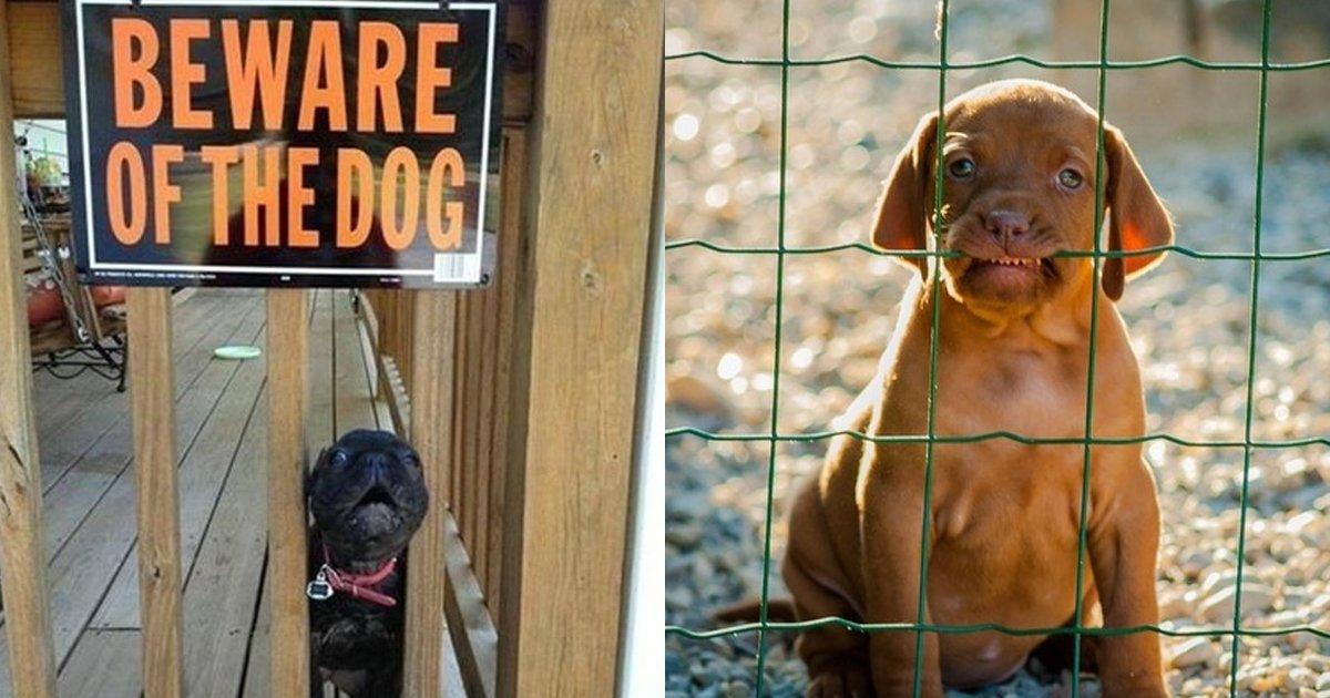cover22 81.png?resize=1200,630 - 18 Perros a los que pusieron a vigilar el jardín, pero no les explicaron cómo hacerlo. ¡Por eso conquistan con su encanto!