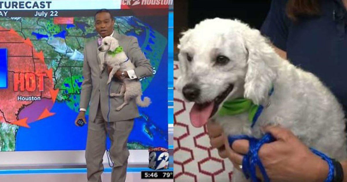 cover22 89.png?resize=300,169 - Un cachorro interrumpió el pronóstico del clima en vivo, y así fue la tierna reacción del reportero