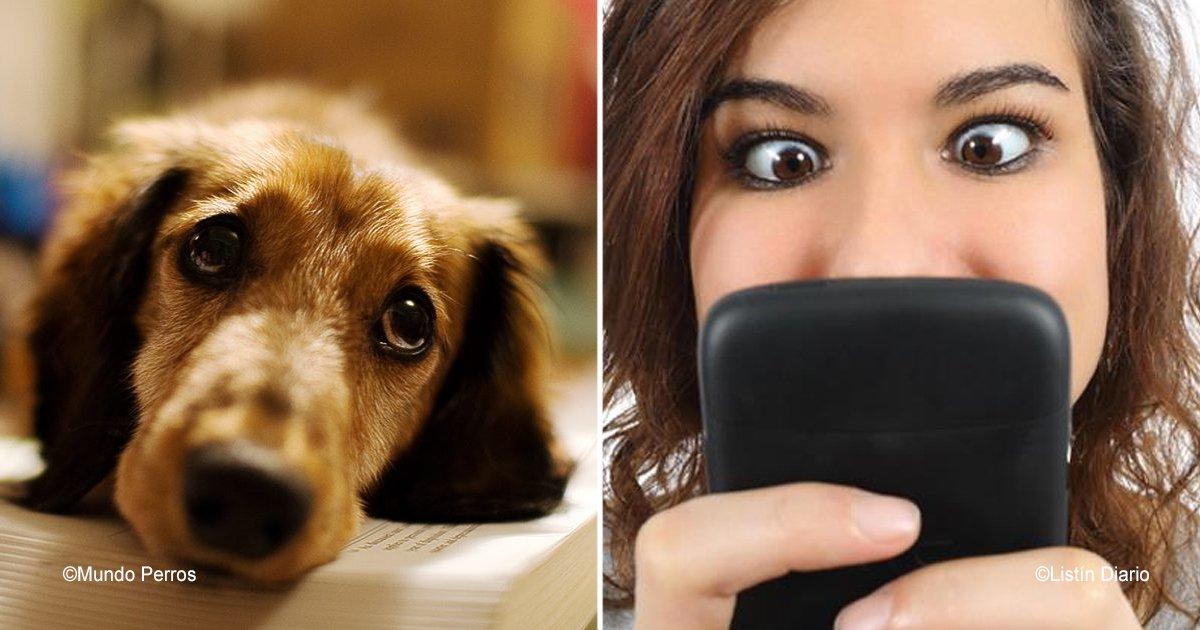 diff 4.jpg?resize=300,169 - Podrías generar una profunda tristeza en tu perro si pasas demasiado tiempo en tu celular