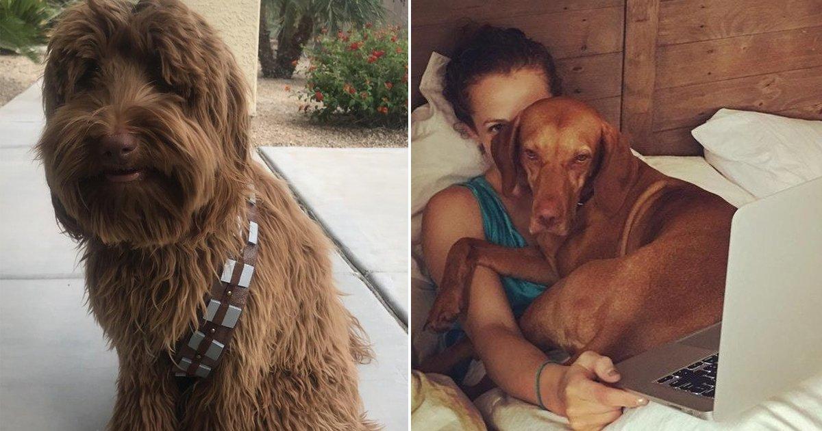 dofg.jpg?resize=1200,630 - 20+ Historias divertidas de dueños de perros que te harán desear tener una mascota así