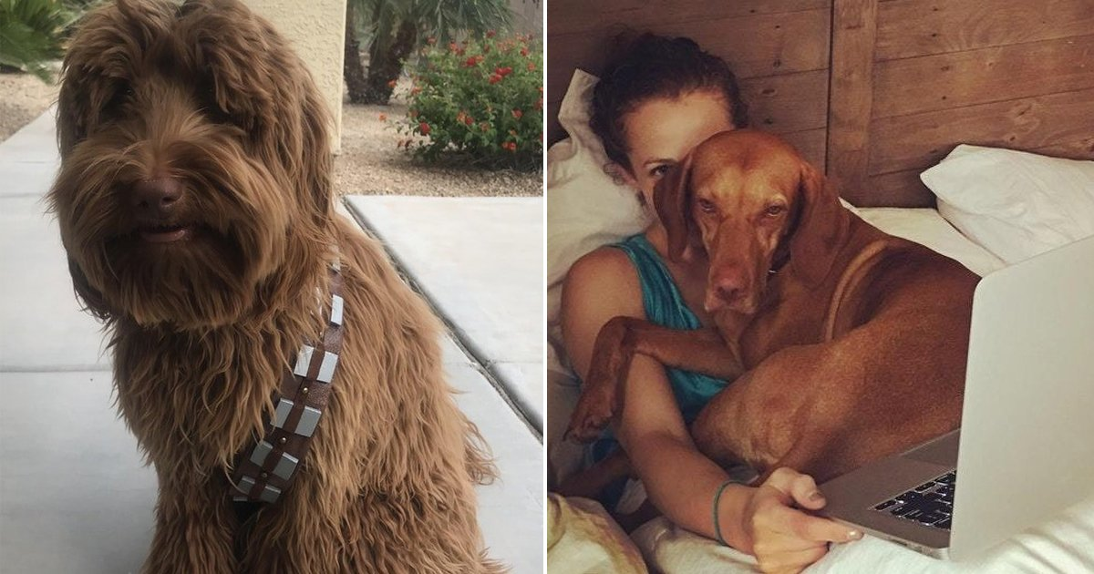 dofg.jpg?resize=300,169 - 20+ Historias divertidas de dueños de perros que te harán desear tener una mascota así