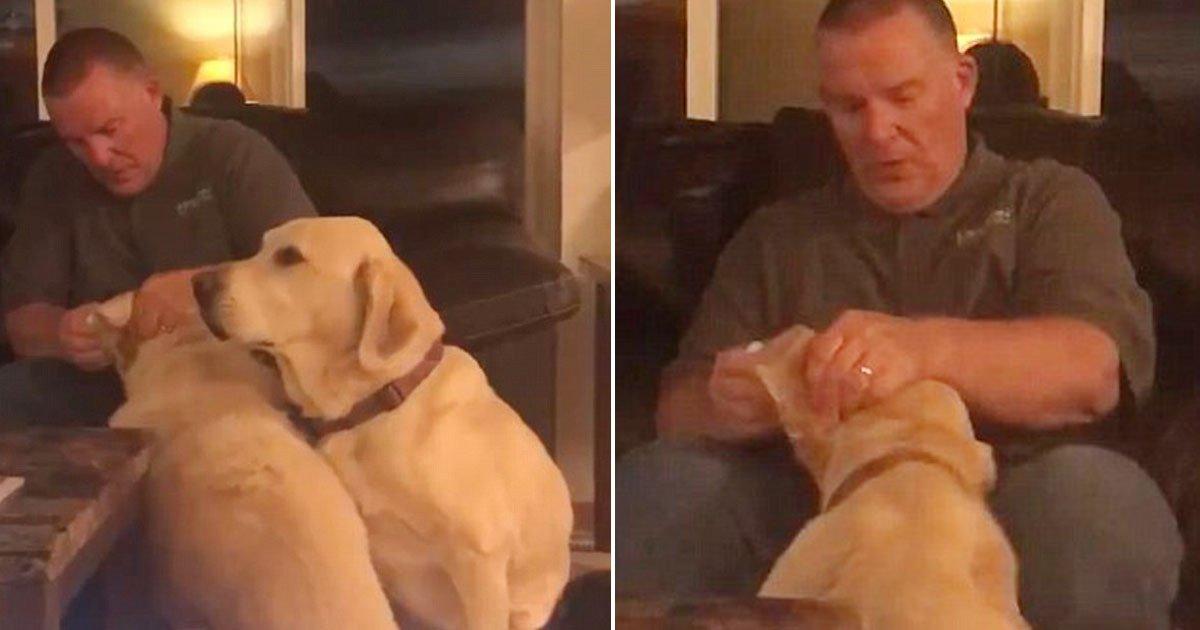 dog 13.jpg?resize=648,365 - Dono finge dar remédio de ouvido para cão para não deixá-lo 'de fora', enquanto o outro é medicado por estar com infecção