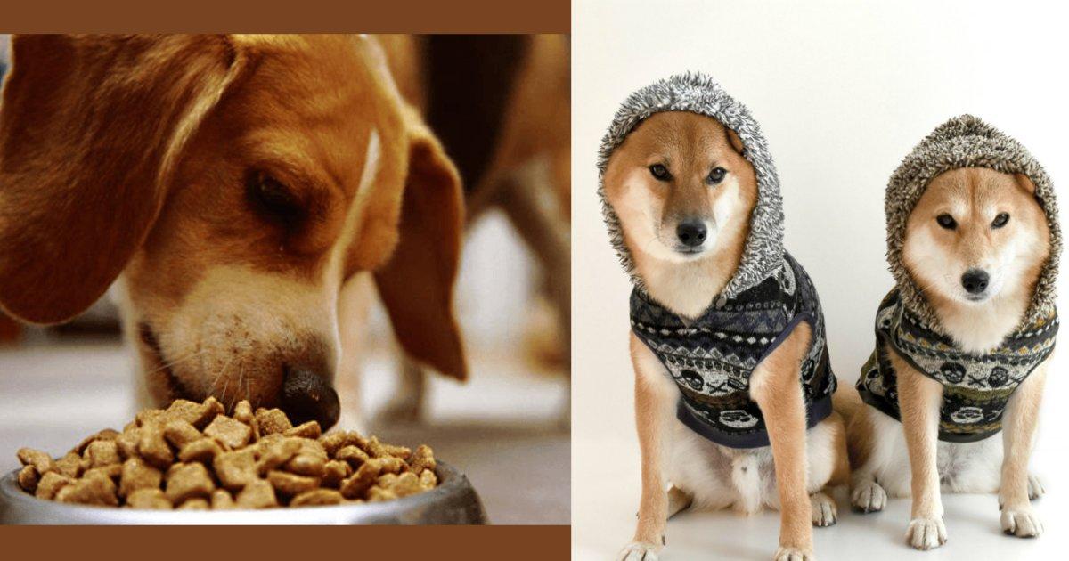 dog 3.png?resize=412,232 - 愛犬にしてはいけないことって?いくら飼い主だからって雑に扱ってはいけません