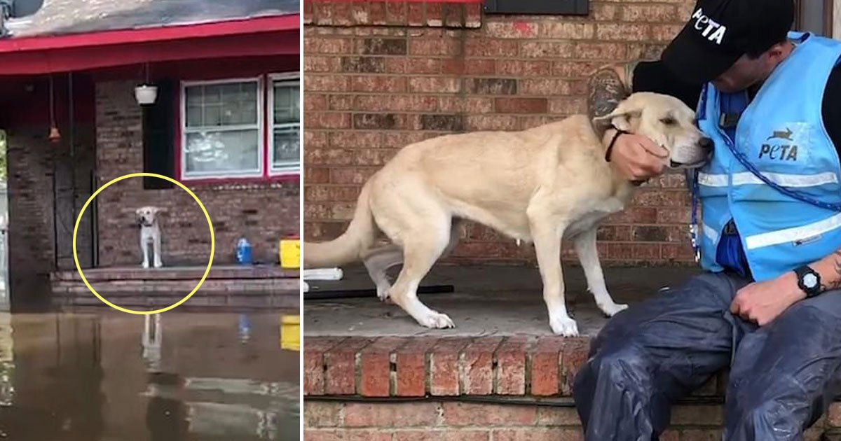 dog rescued.jpg?resize=412,232 - Video Footage Shows PETA Workers Rescuing A Terrified Dog Found Outside A Home During Hurricane Florence