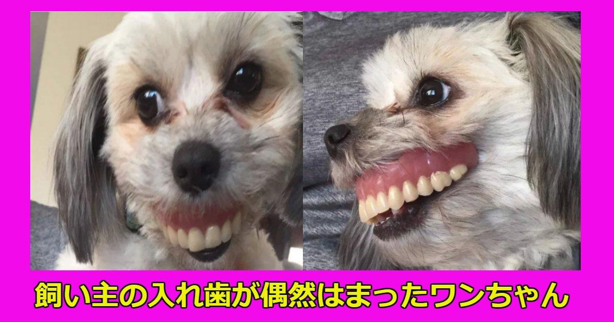 dog.png?resize=636,358 - 飼い主が寝ている隙に入れ歯を自身の口にはめて遊んでいたワンちゃんの顛末