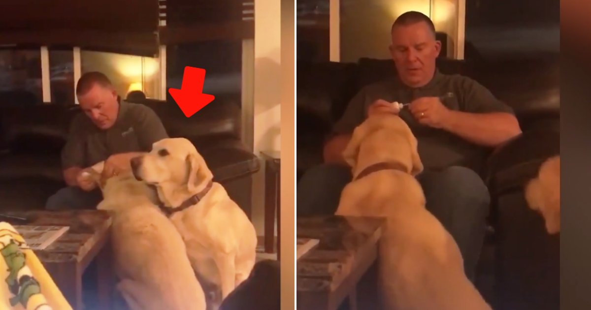 doggo.png?resize=732,290 - Pet Owner Has To Pretend Dog Needs Ear Medicine Because His Pup Sister Does