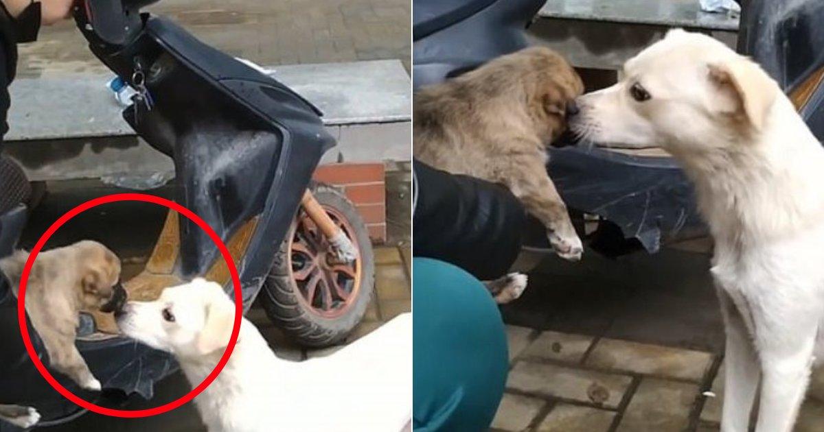 doggy2 1.png?resize=1200,630 - Moment déchirant : une chienne donne un dernier baiser à son chiot avant que son nouveau propriétaire l'emporte