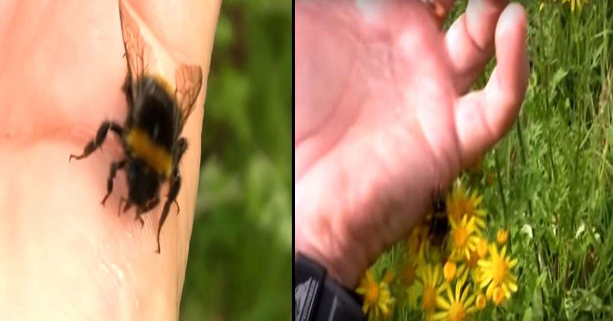 dolph c volker.jpg?resize=412,232 - Guy Hand Feeding And High-Fiving Bee