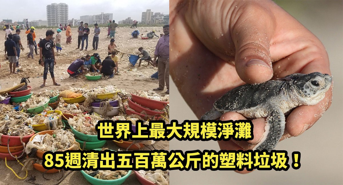 e6b5b7e9be9c.jpg?resize=300,169 - 好消息!海龜寶寶肥來啦~「世界上最大規模淨灘」喚回了這些美麗的生物!